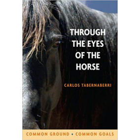 Through the eyes of the horse