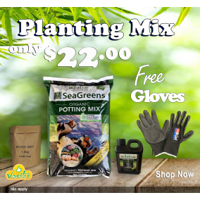Planting Mix Pack - SeaGreens 30L PM + Free Gloves