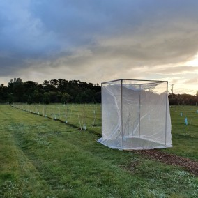 Insect Netting Formed - 1.2M square x 1.8M high