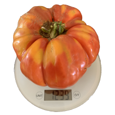 Big Malaka Greek Tomato