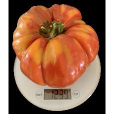 Big Malaka Greek Tomato