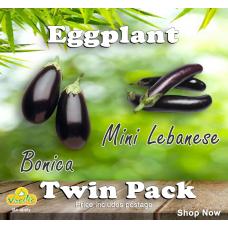 Eggplant Twin Pack