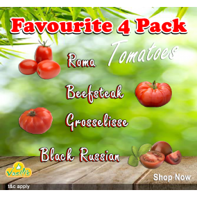 Favourite 4 Pack Tomatoes