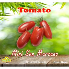 Tomato Mini San Marzano