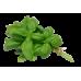 Basil Sweet Large Leaf
