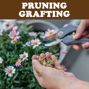 Pruning & Grafting