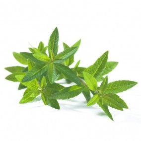 Organic Lemon Verbena Tea