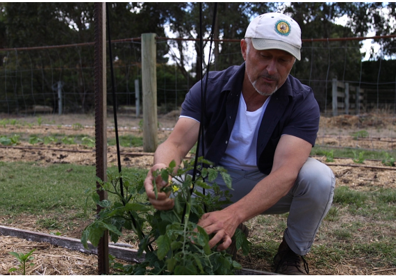 Growing your tomatoes with Vasili