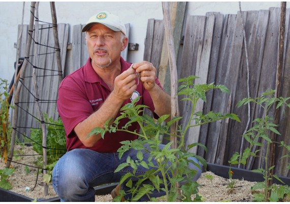 Steaking up your tomatoes with Vasili